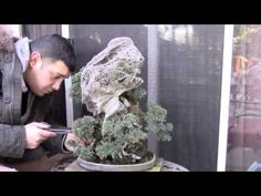 My boyfriend's Youtube channel. You should check it out! He makes bonsai trees.