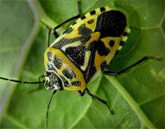 insectos - Buscar con Google