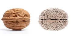 """Was it designed? Foods That Look Like Body Parts They're Good For ~The folds and wrinkles of a walnut bring to mind another human organ: the brain. And it's no surprise walnuts are nicknamed """"brain food."""" I absolutely love this article. Read more. Food Nutrition Facts, Food Facts, Nutrition Chart, Nutrition Month, Fitness Nutrition, Healthy Tips, How To Stay Healthy, Healthy Recipes, Healthy Eating"""