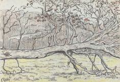 Felled Tree, Normandy (Georges Lacombe)
