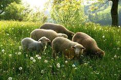 seasonalwonderment:    Springtime