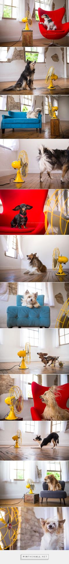 BLOW Photo Series from Illona Haus of Scruffy Dog Photography - Dog Milk