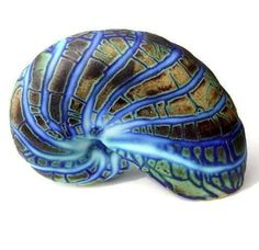Opalised Ammonite