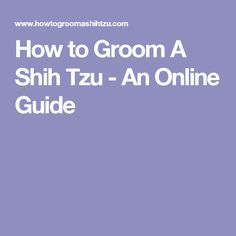 How to Groom A Shih Tzu - An Online Guide