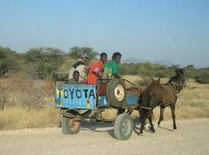 Toyota Trucks, Game Reserve, Donkeys, View Photos, Travel Photos, South Africa, Ferrari, Safari, Travelling