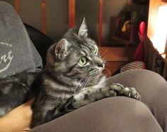 ユカワアツコ– @trill_yukawa ハチと「世界ネコ歩き スペイン」見てます。クールなそぶりで見てますが、猫が画面に近づくと爪がギュッと出るので、膝がイタイよ CNQwHYKUkAAWHwo.jpg (600×475)