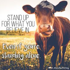 stand up for what you believe in. stand up for what you believe in. Farm Life Quotes, Farmer Quotes, Cow Quotes, Animal Quotes, True Quotes, Farm Sayings, Animal Memes, Funny Animal, Country Girl Quotes