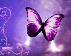 Purple Butterfly Pictures - Desktop Backgrounds