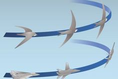 Like a swept-wing fighter jet, some birds can turn on a dime by adjusting the angle of their wings to create tiny tornadoes that draw them up, according to a new study that solves a longstanding mystery. Swift Bird, 4th Grade Science, Falling From The Sky, Bird Wings, Spring Theme, Book Suggestions, Science Classroom, Zoology, Science For Kids