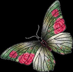 animated butterly gifs - Google Search