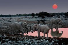 Africa! The dream trip... SUNSET WITH ELEPHANTS - NAMIBIA 2