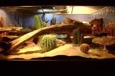 Bearded Dragon tank with cacti