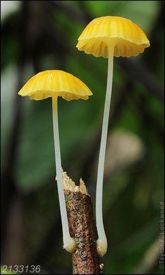 Mushroom Art, Mushroom Fungi, Wild Mushrooms, Stuffed Mushrooms, Mushroom Pictures, Plant Fungus, Pretty Flowers, Mother Nature, Planting Flowers