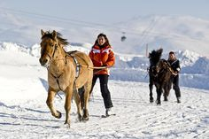 Ski joëring en montagne française Saint Moritz, Horse Adventure, Alpe D Huez, Stations De Ski, Sled, Winter Sports, Skiing, Camel, Husky
