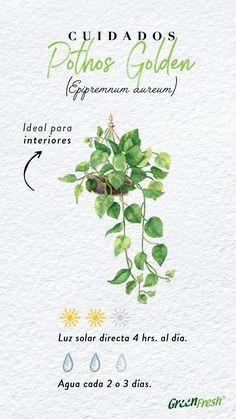 Eco Garden, Home Vegetable Garden, Natural Garden, Vertical Garden Plants, Outdoor Plants, Plant Fungus, Plant Guide, Happy Flowers, Green Life