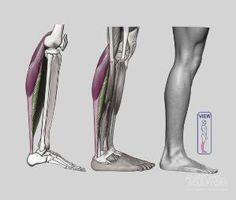 Anatomy For Sculptors - anatomy by cherry