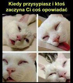 Kiedy chcesz spokojnie zasnąć...  #sen #piątek #weekend #kot
