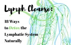 Lymph Cleanse: 18 Ways to Detox the Lymphatic System Naturally Physical Education Games, Health Education, Physical Activities, Circulatory System, Respiratory System, Detox Lymphatic System, Lymph Fluid, Inversion Table, Muscle Anatomy