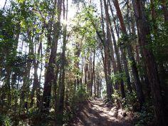 Um passeio pelas árvores.