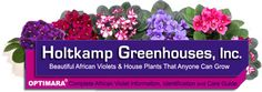 African Violets, House Plants and Care Products Perennial Flowering Plants, Herbaceous Perennials, Foliage Plants, Garden Plants, Indoor Plants, House Plants, Garden Spaces, Potted Plants, Organic Gardening