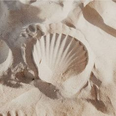 Scallop Shell imprint in the sand. Cream Aesthetic, Beach Aesthetic, Summer Aesthetic, Aesthetic Photo, Jolie Photo, Beach Day, Ocean Beach, Beach Yoga, Sand Beach