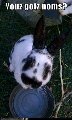 Meet Daisy and Dobby's newest friend: Mozzie Mini Rex/Netherland Dwarf bunny