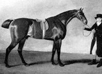 Sir Harry(1795)Sir Peter Teazle- Matron By Alfred. 3x4 To Snap, 4x4x5 To Regulus, 5x5x5x5 To Godolphin Arabian. 19 Starts 9 Wins 7 Seconds 1 Third. Won 1798 Epsom Derby.  Stood In England Until 1804 When He Was Purchased To Stand In U. S. Where He When On To Sire Several Good Colts And Several Important Broodmares For U. S. Racing.