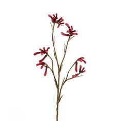 Up your faux floral decor game with our kangaroo paw. Spring Flowers, Wild Flowers, Wildflower Tattoo, Australian Flowers, Kangaroo Paw, Ikebana, Resin Art, Vintage Flowers, Screen Printing