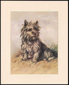 Top Cairn Terrier Ball Adorable Dog - 7b8e898a955dbf18e635d9068b5c5177--cairns-cairn-terrier  Snapshot_43848  .jpg