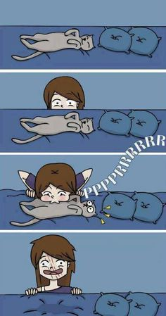 Cat people understand