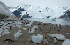 En una sociedad de pingüinos, el macho es el encargado de proteger los huevos mientras la madre busca comida. El macho también es el que amamanta las crías e incuba los huevos.
