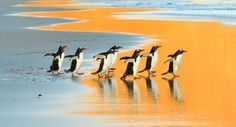 Early Birds Photo by Elmar Weiss — National Geographic Your Shot