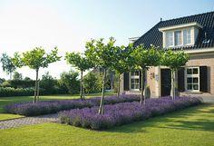 www.buytengewoon.nl. tuinontwerp - tuinaanleg - tuinonderhoud. Modern-klassiek landhuis met bijpassende tuin. Rietgedekte buitenruimte met keuken en haard, gazons, hoogteverschillen, beuken, taxus, buxus en vaste planten. www.buytengewoon.nl: