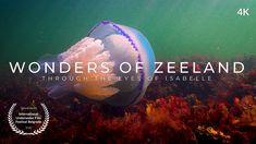 Wonders of Zeeland (4k) Film Festival, Films, Youtube, Movies, Cinema, Movie, Film, Movie Party, Movie Quotes