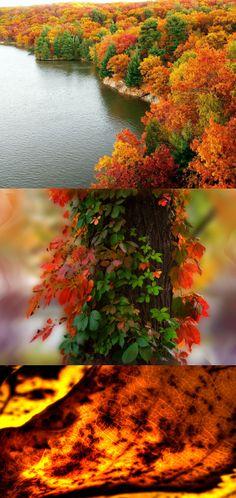 forest autumn colors