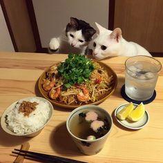 君達やめとけ。がんこ辛いぞ! パッタイ。手すべって、チリパウダーもっさり入ってしまった…。お父はんがおる時に作ってあげればよかった。 #八おこめ #ねこ部 #cat #八おこめ食べ物