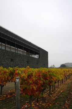 Dominus Winery, Napa Valley CA, 1998 by Herzog & De Meuron