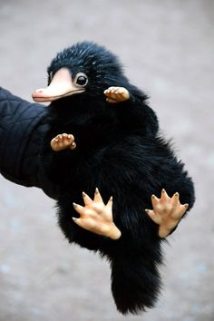 Niffler - Belezza,animales , salud animal y mas Cute Fantasy Creatures, Cute Creatures, Mythical Creatures, Baby Animals, Cute Animals, Harry Potter, Kawaii, Fantastic Beasts And Where, Black Bear