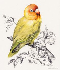 30 Beautiful Bird Drawings and Art works for your inspiration | Read full article: http://webneel.com/bird-drawings | more http://webneel.com/daily | Follow us www.pinterest.com/webneel