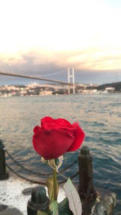 Beautiful Flowers Wallpapers, Beautiful Roses, Beautiful Places, Flower Phone Wallpaper, Cute Wallpaper Backgrounds, Sky Aesthetic, Aesthetic Images, Bosphorus Bridge, Istanbul Travel