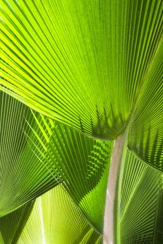 background / Palm fronds - Real Time - Diet, Exercise, Fitness, Finance You for Healthy articles ideas Green Life, Go Green, Green Colors, Growing Greens, Seaside Style, Palm Fronds, Green Nature, Patterns In Nature, Green Turquoise