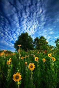 Вдохновляющая красота лета.