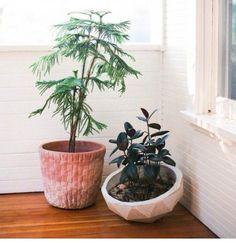tjrs plantes