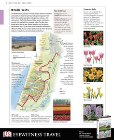 Explore the bulb fields between Haarlem and Leiden, Holland's primary bulb-growing area, with this free driving itinerary guide from DK Eyewitness Travel Guide: The Netherlands.