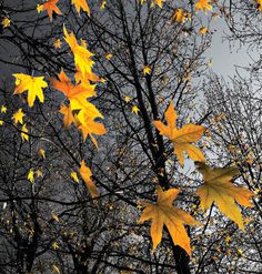 Want to capture those beautiful fall leaves