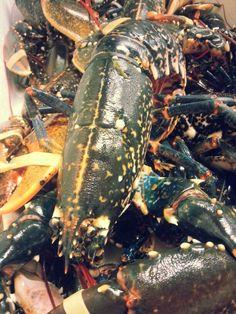 #lobsterbuzz @thedriftbar #drakeandmorgan #driftydelight Liverpool Street, Photos, Food, Eten, Meals, Cake Smash Pictures, Diet