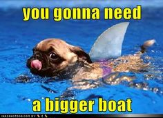 funny dog pictures - Jaws