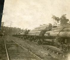 View showing logs being hauled by the Gulf, Florida and Alabama Railway Company for the Southern States Lumber Company