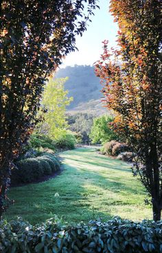 An English Meets Australian Garden In Northern Nsw Starting From Scratch On This Northern Nsw Property Garden Designer Carolyn Robinson Has Created An All Australian Garden With A New England Twist Australian Garden Design, Australian Native Garden, Garden Landscape Design, Small Garden Design, Native Australians, Beach Gardens, Large Plants, Garden Planning, Garden Paths