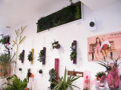 Des cadres végétaux à Valenciennes | Le petit blog de Fleurs d'avenir © :